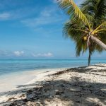 beach with a palm tree and the ocean on a Caribbean bareboat charter