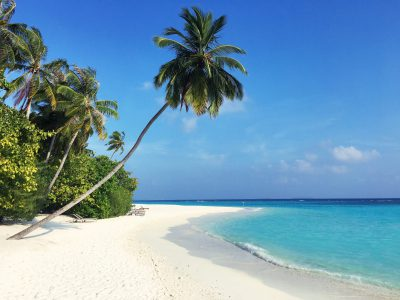 beach and a palm tree in The Maldives a great place to sail in winter